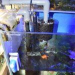 自作オーバーフロー水槽で二階建水槽をつなぐ!
