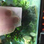 水槽のガラスを掃除する:コケや白い汚れ